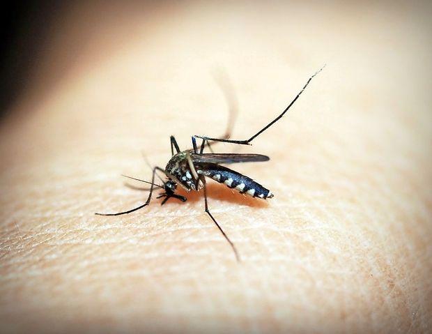 Komarji in virus zahodnega Nila