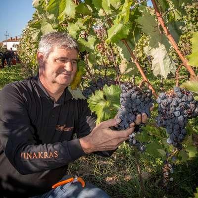 Prodaja vina je specifična. Povezana je z regijo, od koder vino  izhaja, nujno pa je treba tudi vedeti, kako grozdje zraste  in kako se  iz njega pridela dobro vino,  je prepričan Marjan Colja. Foto: Leo Caharija