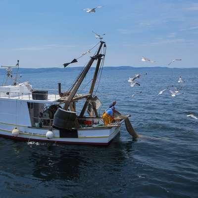 Slovenski ribiči doslej prejeli 48 kazni iz Hrvaške