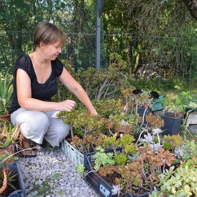 Jana Sušanj svoje kaktuse in sočnice z veseljem pokaže obiskovalcem. Foto: Alenka Ožbot