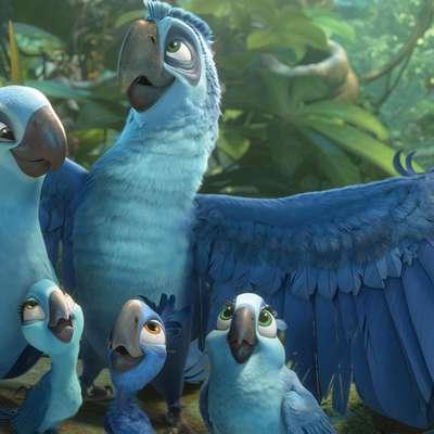 Modre papige vrste spixov makav so doživele svetovno slavo leta  2011 s prvim delom animiranega filma Rio, ki je leta 2014 dobil  nadaljevanje.