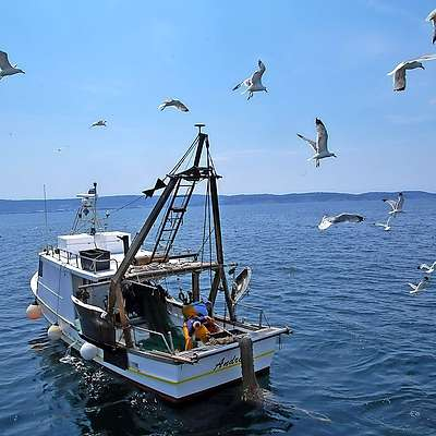 Slabo stanje ribjega staleža v Jadranu problem tudi za ribiče
