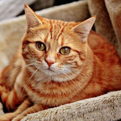 Kupovala mačko, ostala brez denarja