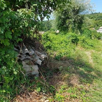 """Še malo pa bo narava naredila svoje in bo nevaren azbest """"izginil""""  v primežu zelenih ovijalk.  Foto: Nataša Hlaj"""