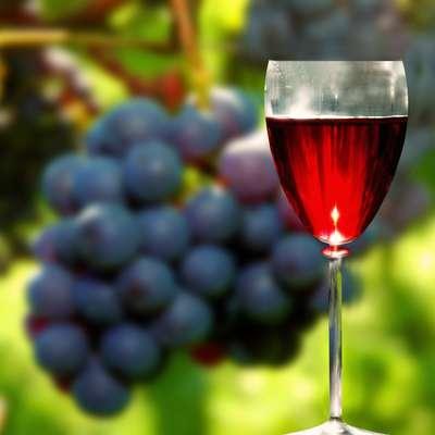 Povprečni Slovenec je popil 39 litrov vina