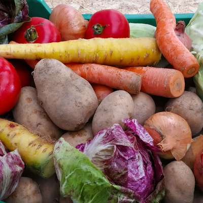 Zelenjava za zdrav želodec Foto: Ivan Merljak