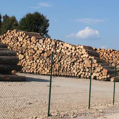 Najem skladišča je družbi SiDG omogočil, da so les odpeljali iz  gozda in s tem med drugim zmanjšali  nevarnost širjenja podlubnikov. Foto: Veronika Rupnik Ženko