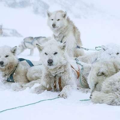V surovem naravnem okolju Grenlandije je vzniknila ena najbolj  specializiranih lovskih kultur na svetu.