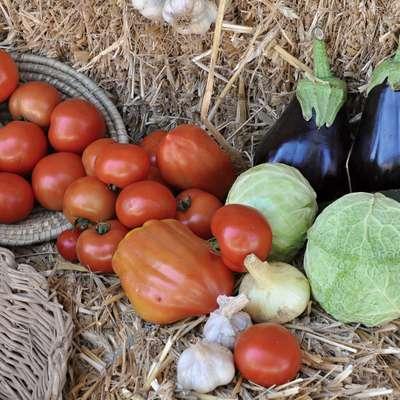 Strokovnjaki v poletnih mesecih še posebej priporočajo sezonsko  zelenjavo iz domačega okolja.  Foto: STA