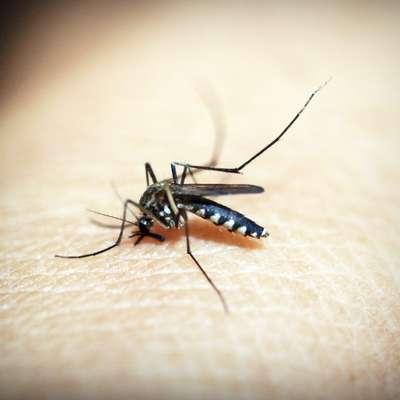 Komarji in vročina