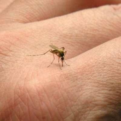 NIJZ svetuje vsem, naj poskrbijo, da jih ne bi pikali komarji, saj so  ti lahko tudi v Sloveniji okuženi z virusom zahodnega Nila.