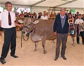 Niku Medenu in njegovi kravi Mojci je lento oziroma  kravji zvonec podelil dr. Janez Verbič Foto: Bogdan Macarol