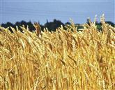 Žito je iz Romunije - tja pa iz držav izven EU - potovalo v Italijo, kjer je iz običajnega postalo ekološko